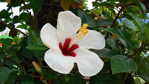 florlazarocardenas