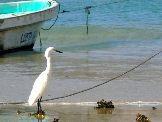 pajaro y pesca