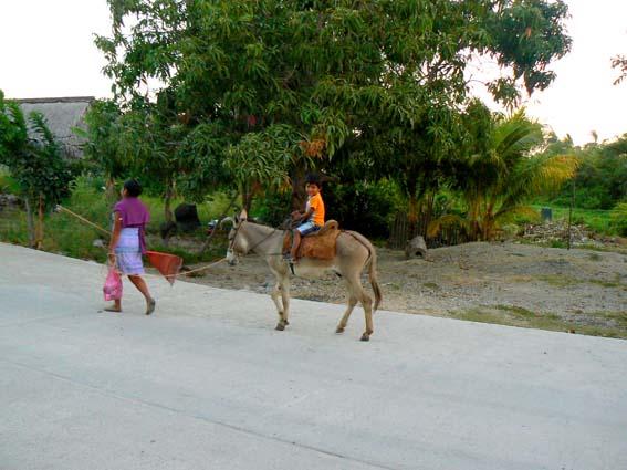 burro en maruataaaa