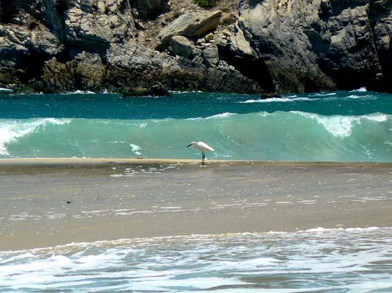 capas de mar y pajaro